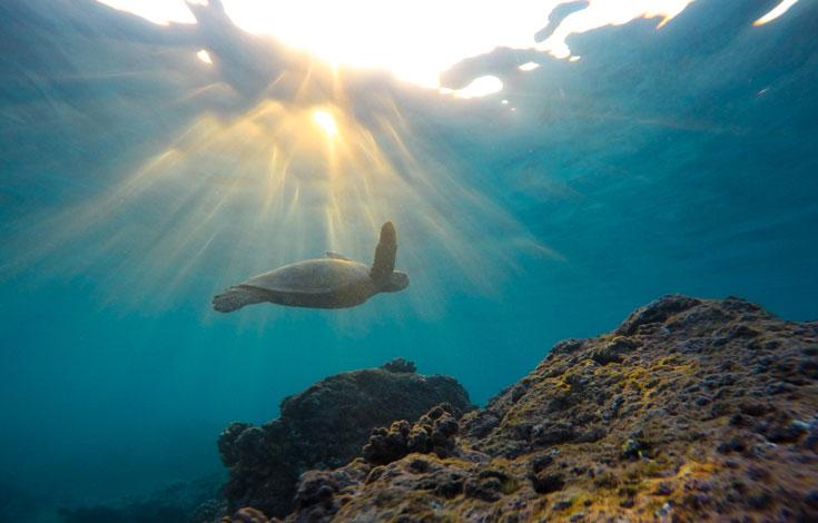 Sun, ocean, turtle swimming