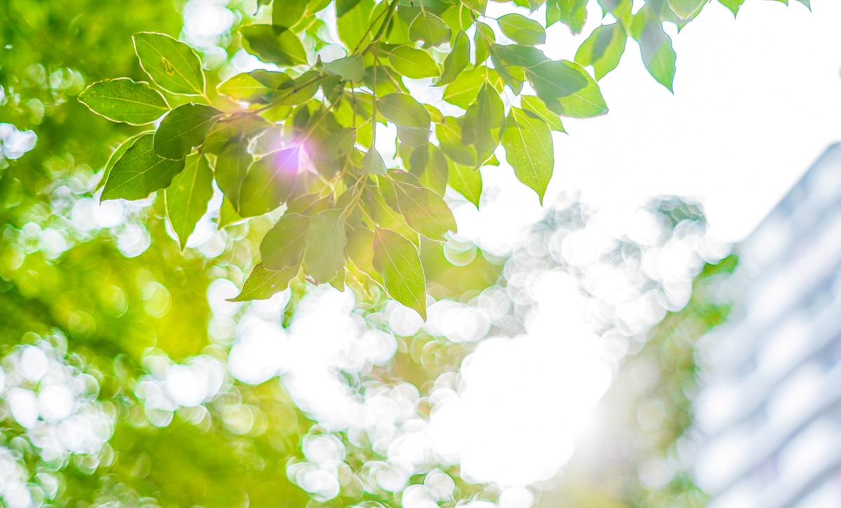 Upward view of tree leaves near a building with bright, sunny background