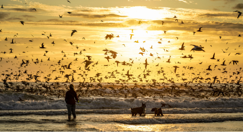 Azure Migrations