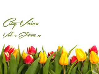 May City Voice