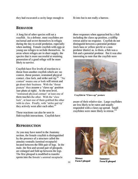 Outdoornebraska The Crayfish Of Nebraska