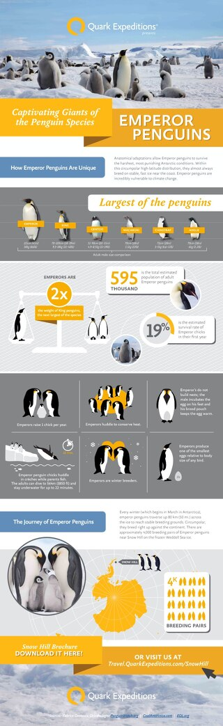 Emperor Penguins Infographic