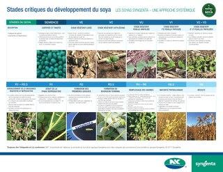 Stades critiques du développement du soya