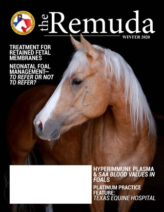 2020 Winter Edition - The Remuda