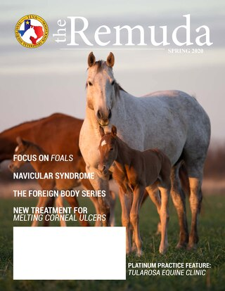 2020 Spring Edition - The Remuda