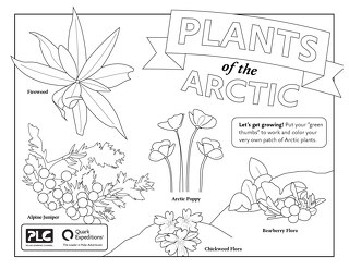 Flower Power Coloring Sheet
