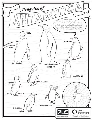 Penguins of Antarctica Kids Coloring Sheet
