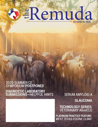 2020 Summer Edition - The Remuda