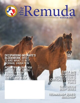 2021 Winter Edition - The Remuda