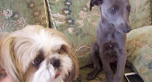 GIZMO & DOBBY - Dog friendly holidays