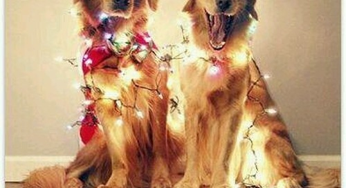 Merry Christmas! #woofwoof