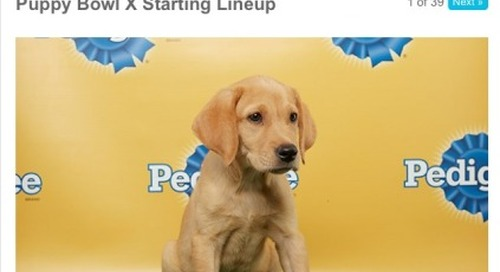Getting pumped for the big game…yup, the puppy bowl!...