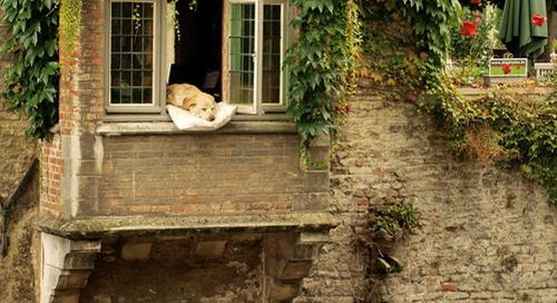 A dog's life…