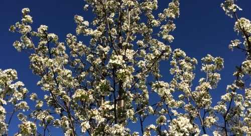 Loving this spring day! Sun, blooms & blue sky…