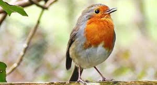 Big Garden Birdwatch 2016