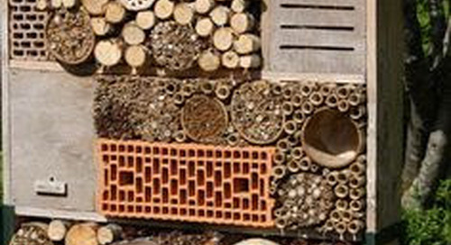 Check out our Bug Hotel!!
