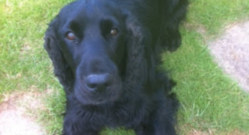 "Ollie ""my doggie friends on the park"""
