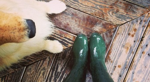 Fall essentials! A golden & some wellies.