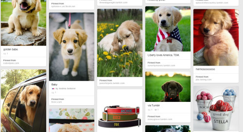 "Our ""bark"" pinterest board is over the top..."