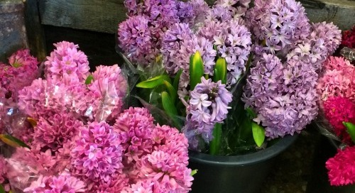 Yes, roses are lovely…but these hyacinths are beautiful!...