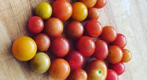 #Fresh #harvested #tomatoes #foodnerd #happiness #vegas #foodie...