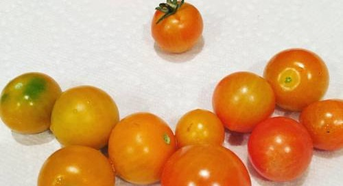 Happy #harvest #farmer #nerd #tomatoes #lasvegas #produce from...