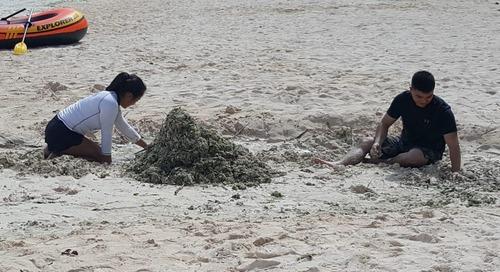 Volunteers clean Tumon Bay of invasive algae
