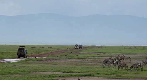 Thing You Have To Do Before You Die: Safari in Ngorongoro Crater