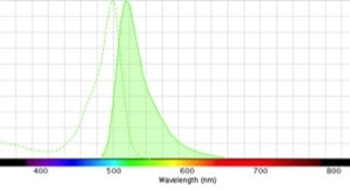 The Exciting (and Emitting) World of Fluorescence