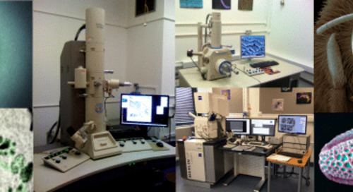 An Introduction to Electron Microscopy for Biologists