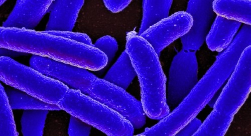Basic Bacterial Culturing Practices