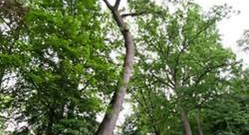 Can You Save a Leaning Tree?
