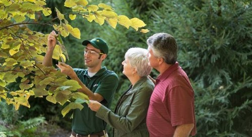 The 3-Step Guide to Choosing a Safe Tree Service