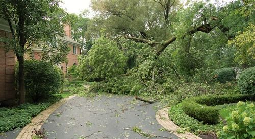 Protect Your Home by Prepping Trees for Tornadoes and Hurricanes