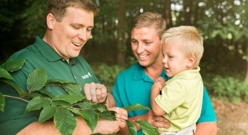 Most Common Questions about Summer Tree Care