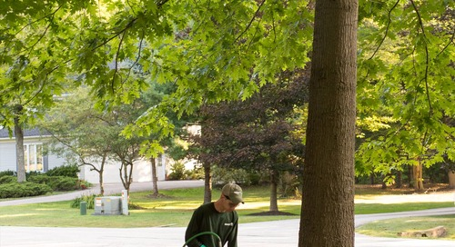 What, When and Why: The Best Way to Fertilize Trees