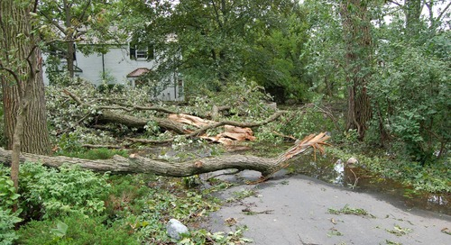 3 Steps to Reduce Wind and Storm Damage on Trees