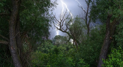 How to Spot—And Protect—Trees from Lightning