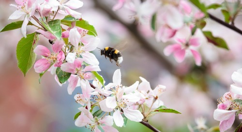 Do Bees Like Trees? Trees for Bees Guide