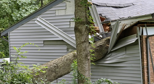 Does Homeowners Insurance Cover Tree Removal After Storms?
