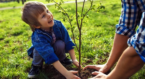 4 Tips on Caring for Newly Planted Trees