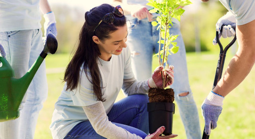 Is it Safe to Plant Trees in Summer?