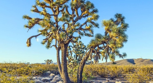Best Trees for Drought Areas (Drought Tolerant Trees by Zone)