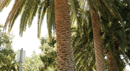 When Is the Best Time to Prune Palm Trees?