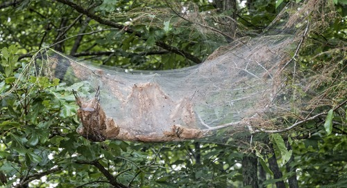 What Spider Builds Webs in Trees? And How to Get Rid of Them