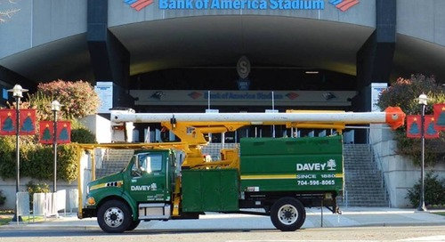 Spotlight: Davey Cares for Trees at Bank of America Stadium