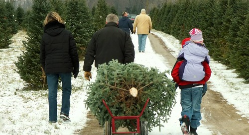 Skip the Sugar Water - Best Care for Christmas Trees