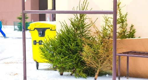 What To Do With Christmas Trees after the Holidays