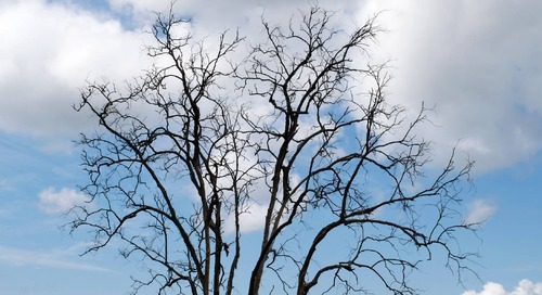 How to Tell if a Tree is Dead in Winter