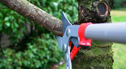 3 Best Tree Trimming Tools to Own